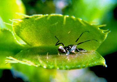 venus-flytrap3